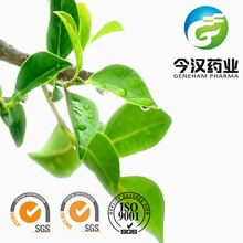 Natural Antioxidant Green Tea Extract Polyphenols Manufacturer in China