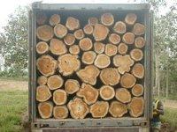Teak wood rough logs