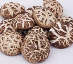 100% Natural 25% Polysaccharides Flower Shiitake Mushroom Extract