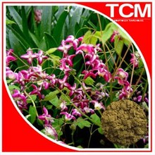 Natural herb medicine epimedium extract Icariin 10%,20%,40% 60%,98% s-ex medicines for men