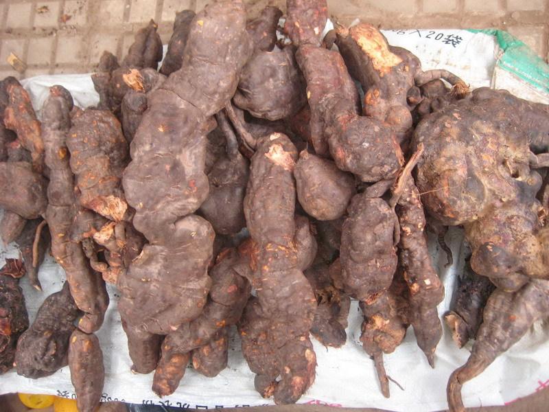 Factory supply best price organic bio hot sale polygonum multiflorum extract