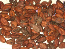High Grade Dried Raw Cocoa Beans for Sale