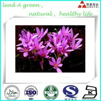 Best Quality 100% Nature 64-86-8 Colchicum autumnale extract Colchicine 98%