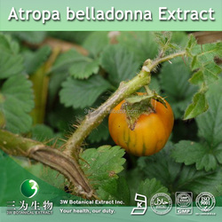 High Quality Atropa Belladonna Extract,Atropa Belladonna Extract Powder 4:1 10:1