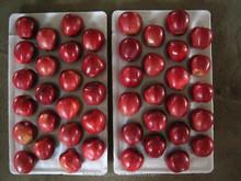 2015 New Crop Chinese Apple Fuji Apple