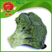 Bulk Cheap Broccoli Frozen broccoli florets