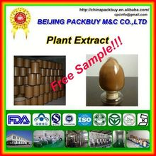 Top Quality From 10 Years experience manufacture ginseng extract