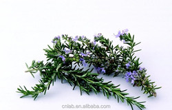 organic dried rosemary leaves extract via CO2 extraction