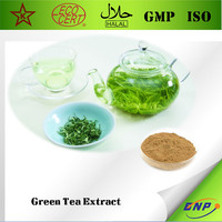 Buy Natural Green Tea Extract Powder