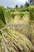 white rice production