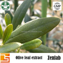 Manufacture supply Olive leaf extract with Olive leaf extract powder 20:1