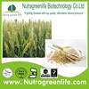 /product-gs/factory-supply-pure-naural-wheat-germ-powder-60221972873.html