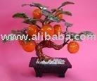 Jade mandarina planta