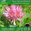 Health Food Red Clover Flower Powder