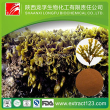 Trade assurance concentrated seaweed extract