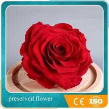 Wholesale Flower Decoration Natural Preserved Flower Rose
