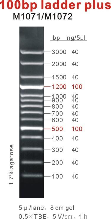 100bp ladder plus