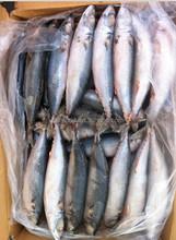 Cheap Frozen Pacific Mackerel - Scomber Japoncius