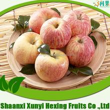 Fresh fuji Apple fruit/scientific name of fruits in China