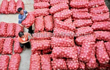 dehydrated onion buyers
