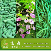 2015 New Harvest Frozen Green Beans From China Supplier