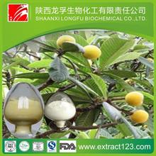 best quality Loquat Leaf extract
