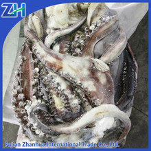 Good quality peru giant squid frozen giant squid