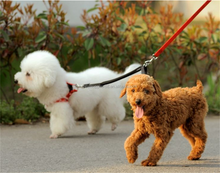Double head pet traction rope dog leash dogs wholesale pet collar