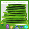 2015 crop hot sale frozen IQF green beans with high quality