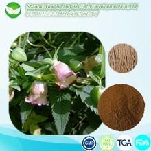 Factory Supply Plant Extract Radix Codonopsis pilosula P.E. /Codonopsis pilosula Extract