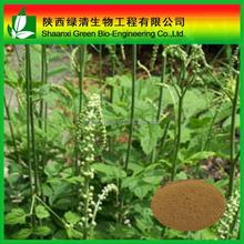 Black Cohosh Extract/tritepene Glycosides/triterpenoides Saponis/High Quality Gotu Kola Extract