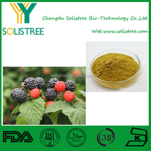 Best Selling Raspberry Ketone Or Raspberry Extract 10:1 At Lowest Price