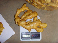 fresh ginger 2015new crop