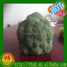 fresh broccoli on sale