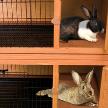 2-Story Outdoor Rabbit Hutch With Run