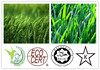 /p-detail/nutricional-y-natural-de-la-hierba-de-cebada-en-polvo-300003387823.html