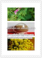 100% Natural Mimosa P.E./Mimosa Tenuiflora Extract