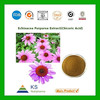 Manufacturer supply 100% Pure Natural Echinacea purpurea Chicoric Acid powder