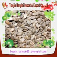bulk pumpkin seeds wholesale pumpkin seeds kernel