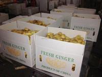 2014 new crop ginger export black ginger price