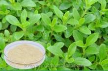 Stevia plant extract Stevioside 80%-98% sweetener supplement