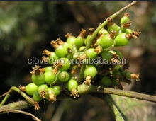 10:1 High quality Dodder Seed Extract/semen cuscutae extract