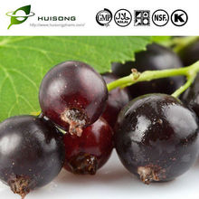 Black Currant Extract for hair loss