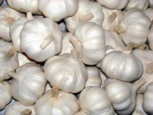 GARLIC FROM SOUTH AFRICA