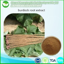 100% natural chinese herb powder burdock root extract