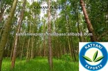Hot Sale Product Eucalyptus Essential Oil
