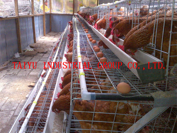 taiyu 2014 new design chicken egg layers cages for poultry