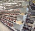 Equipos automáticos tipo A para granjas avícolas/de aves de corral/de gallinas/de pollería/de gallinas de EAU a la venta