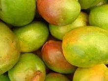 Fresh Mango high quality