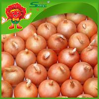 High Quality Fresh Onions in Mesh Bag